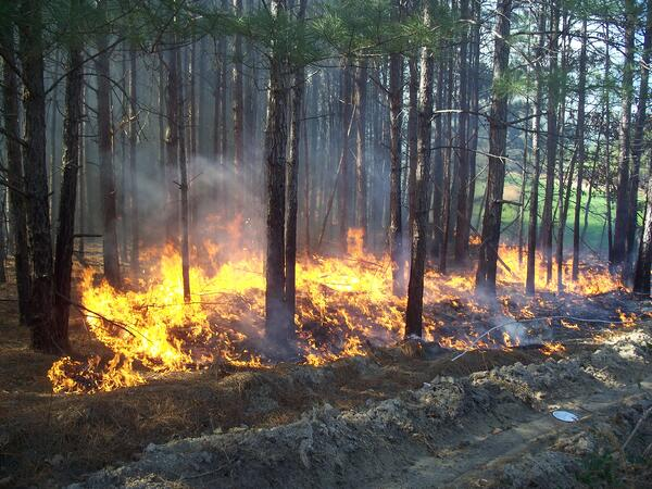 Image of low flames burning some underbrush directly behind a trench dug in the ground to serve as a firebreak