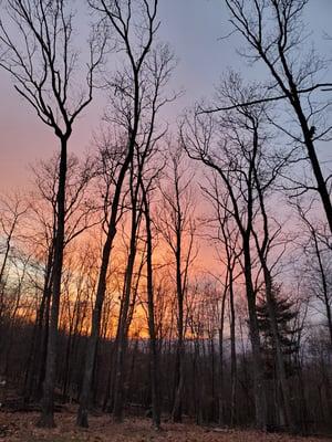 Photo of the sun setting over trees on Jon's property