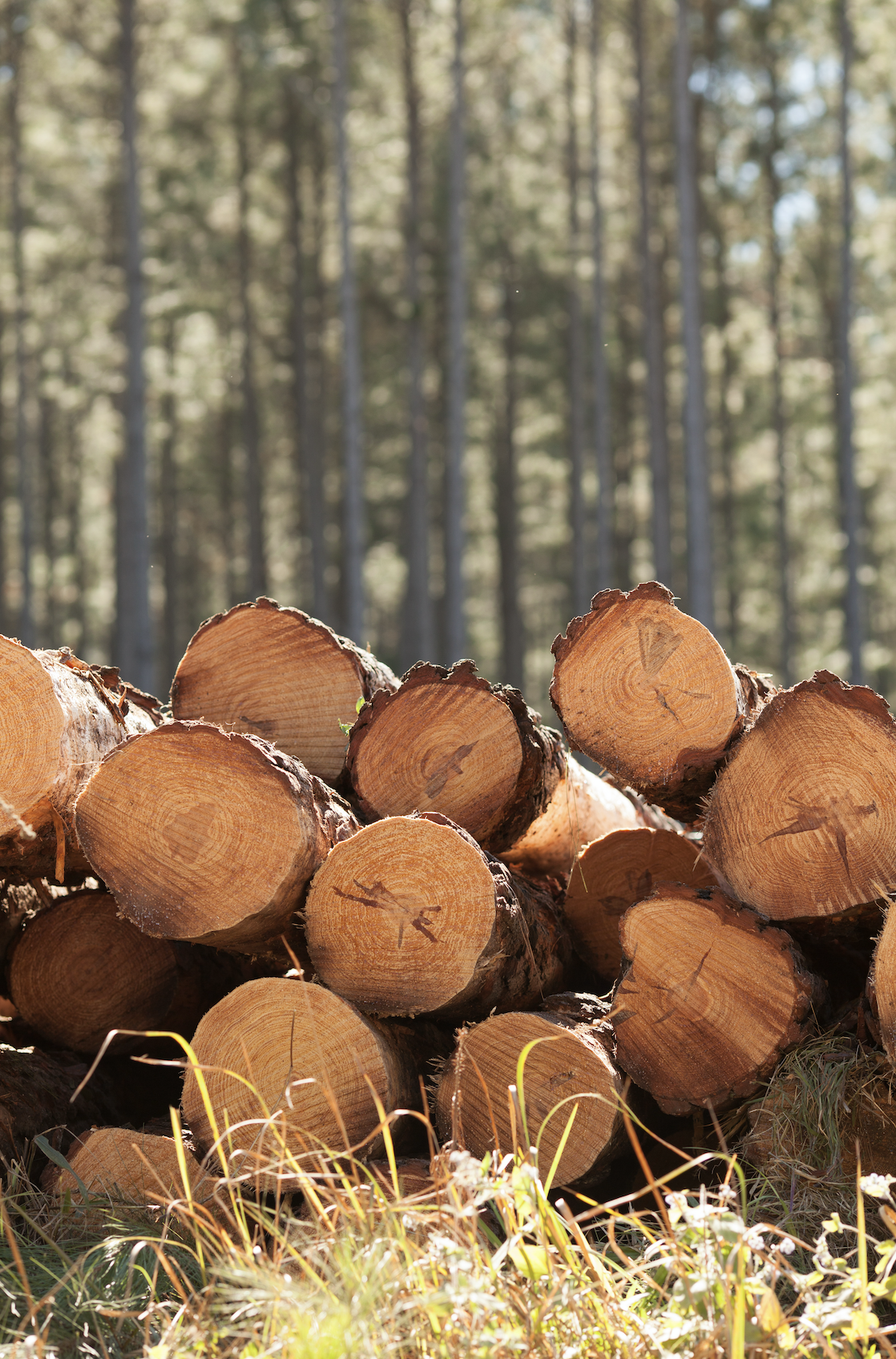 Why work with a consulting forester in alabama? Sustainable timber harvest.