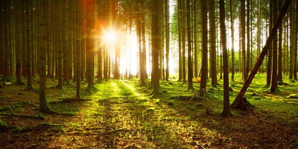 - woodscamp- american forest foundation - tree farm - alabama forestry