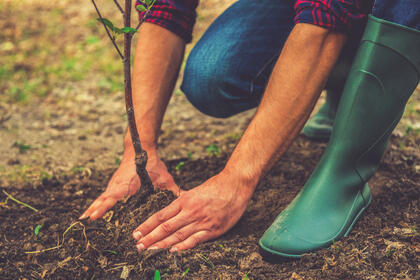 close up of a man wearing green rubber boots, jeans and a red and blue plaid shirt bending down, securing a seedling in the ground