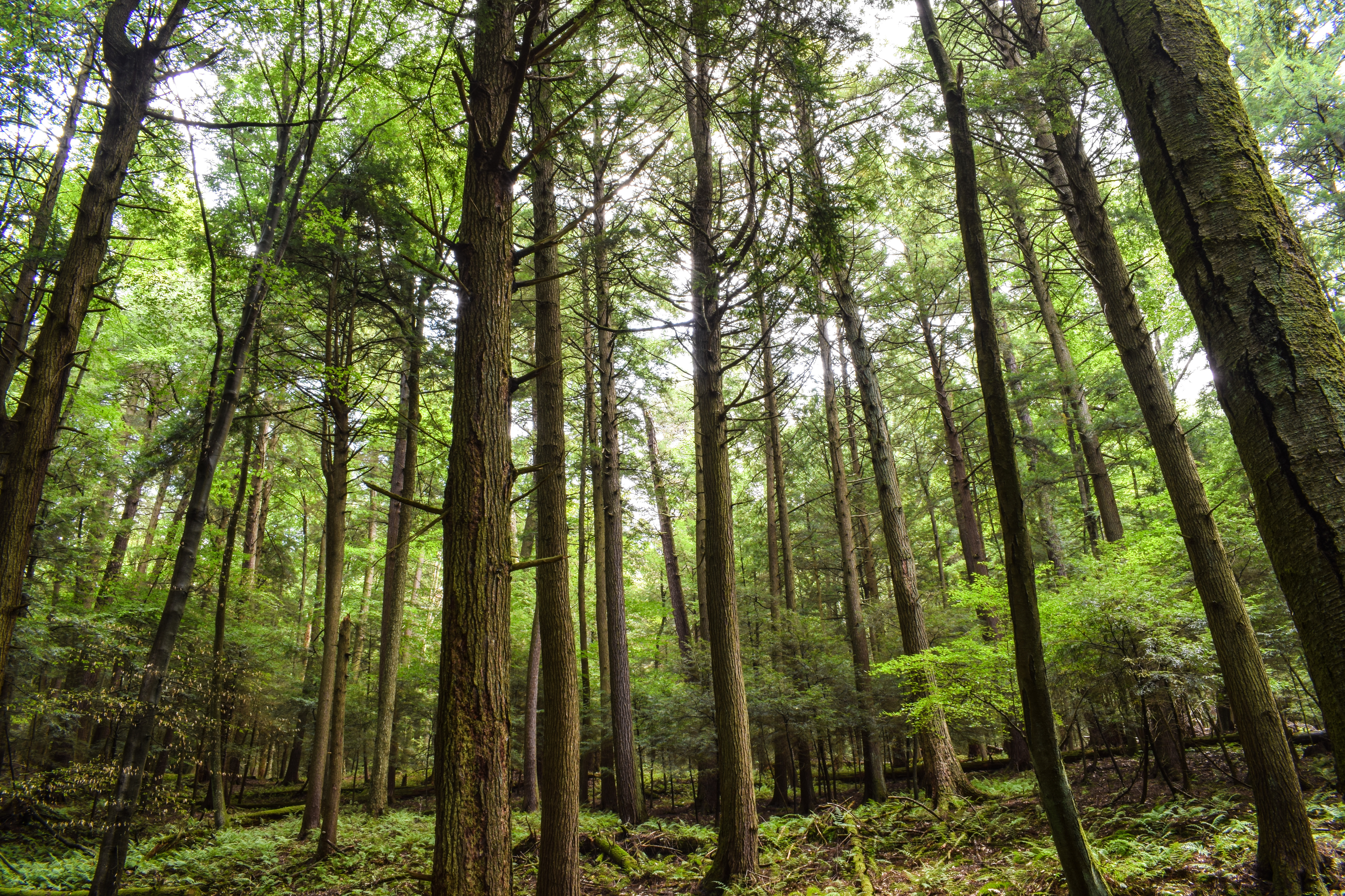 shutterstock_Old PA Forest