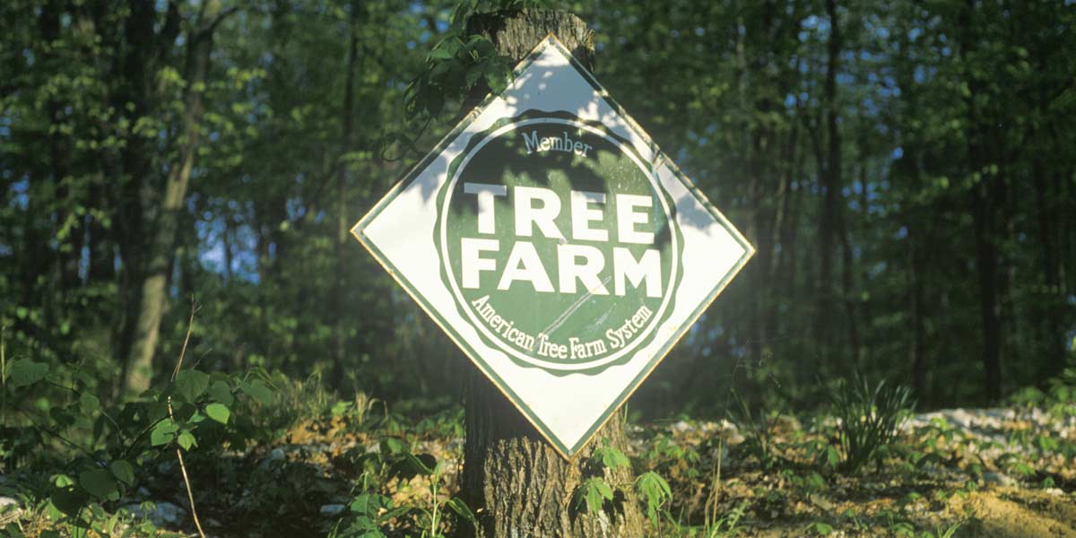tree-farm-sign